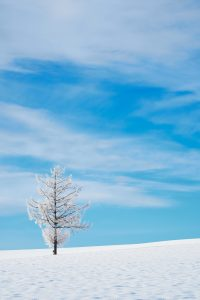 winter_hokkaido1